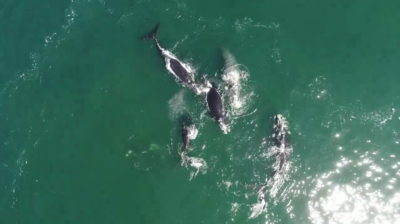 Whale watching from above in Kalk Bay, South Africa.